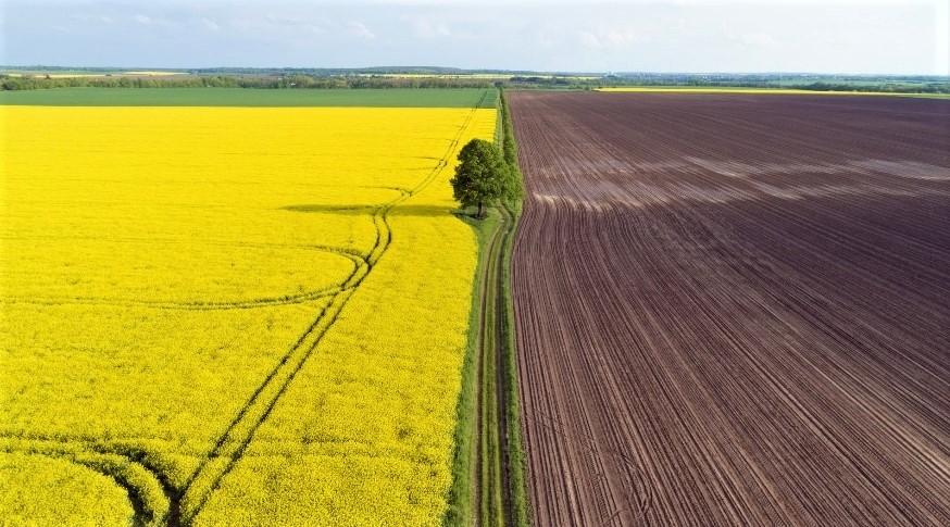 Запровадження ринку землі: чи все готово?