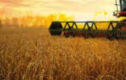 У цьому році аграрії зібрали на 3 млн тонн більше продовольчого зерна, ніж торік