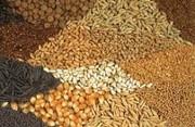 Міжнародна зернова рада IGC збільшує прогноз загального світового виробництва зерна