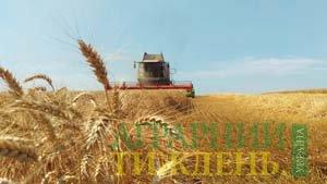 Сплановане зерно: 80 чи більше?