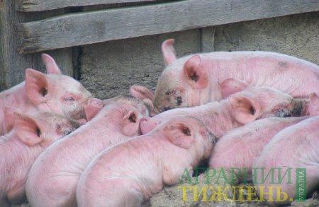 Крупнейший в мире производитель свинины сворачивает работу из-за АЧС